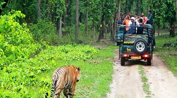 SOUTH INDIA WILDLIFE AND CULTURE